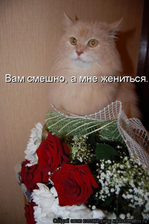 Котоматрица: Вам смешно, а мне жениться.