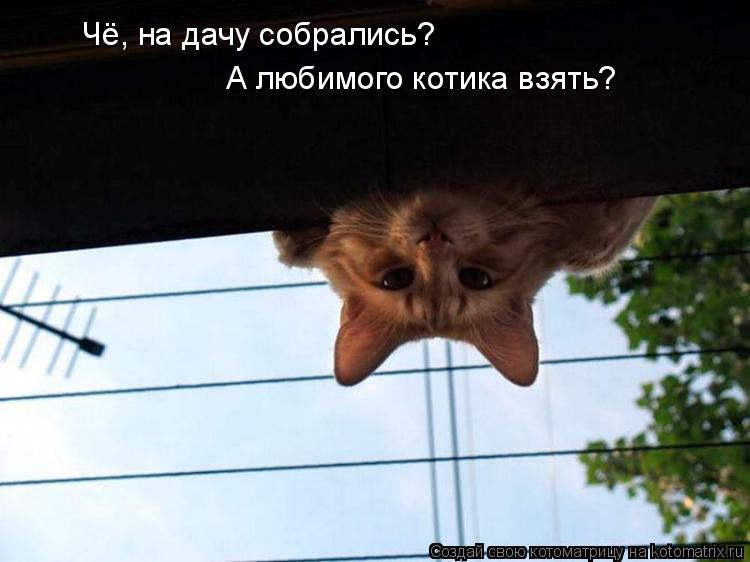 Котоматрица: Чё, на дачу собрались? А любимого котика взять?