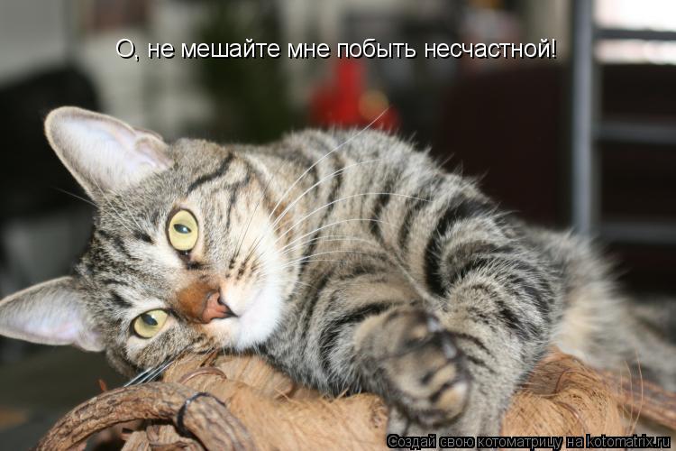 Котоматрица: О, не мешайте мне побыть несчастной!