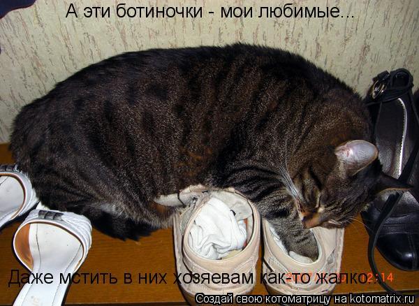 Котоматрица: А эти ботиночки - мои любимые... Даже мстить в них хозяевам как-то жалко...