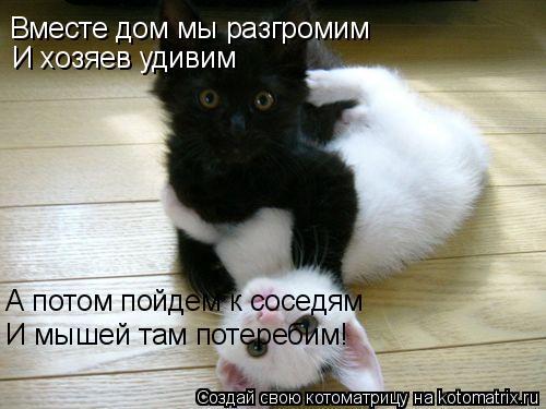 Котоматрица: Вместе дом мы разгромим И хозяев удивим А потом пойдем к соседям И мышей там потеребим!
