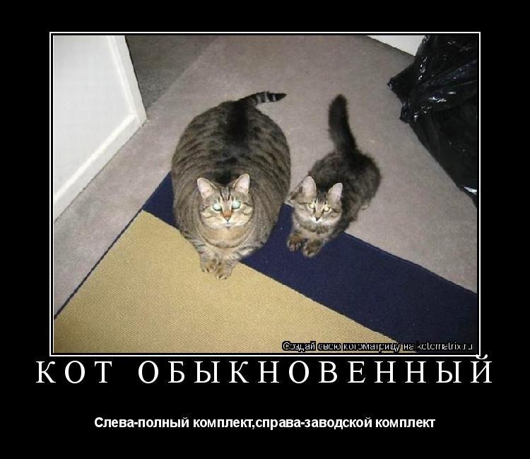 Котоматрица: Кот обыкновенный Слева-полный комплект,справа-заводской комплект