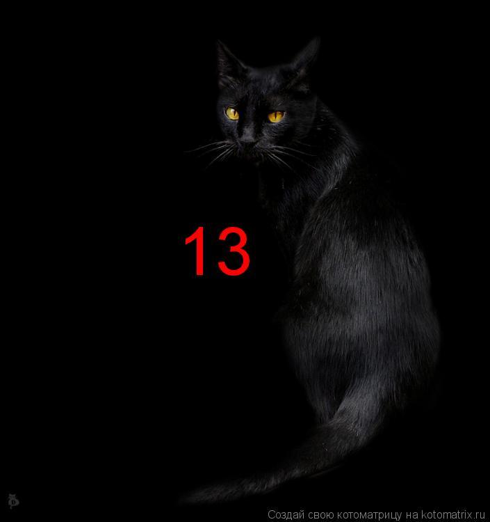 Котоматрица: 13