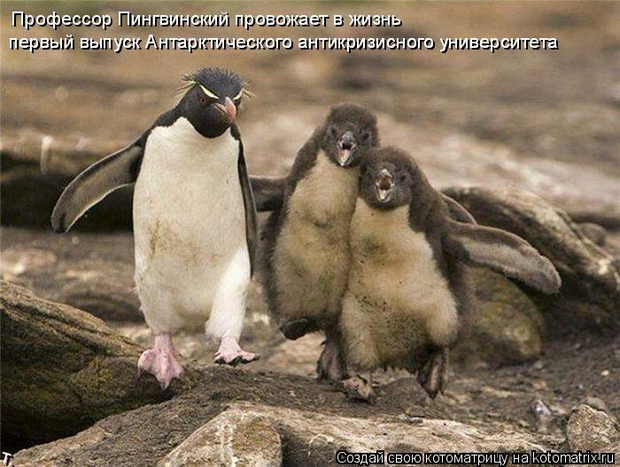 Котоматрица: Профессор Пингвинский провожает в жизнь  первый выпуск Антарктического антикризисного университета  первый выпуск Антарктического антик