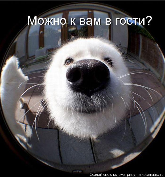 Котоматрица: Можно к вам в гости?