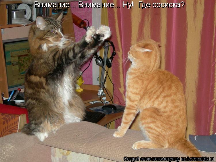 Котоматрица: Внимание... Внимание... Ну!  Где сосиска?