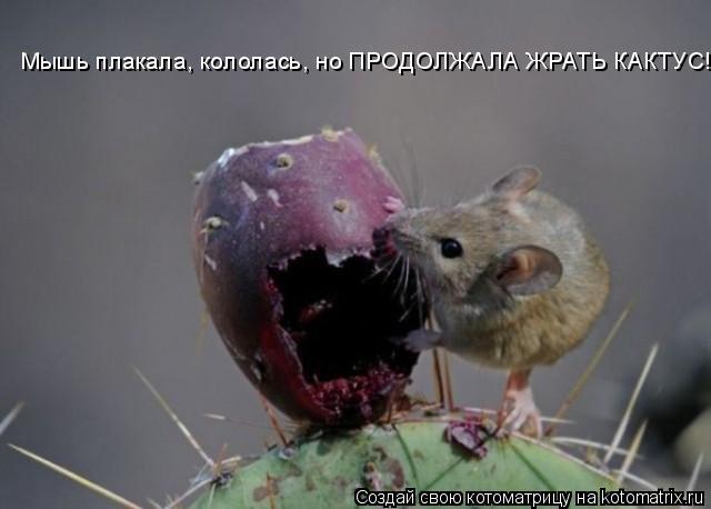 Котоматрица: Мышь плакала, кололась, но ПРОДОЛЖАЛА ЖРАТЬ КАКТУС!