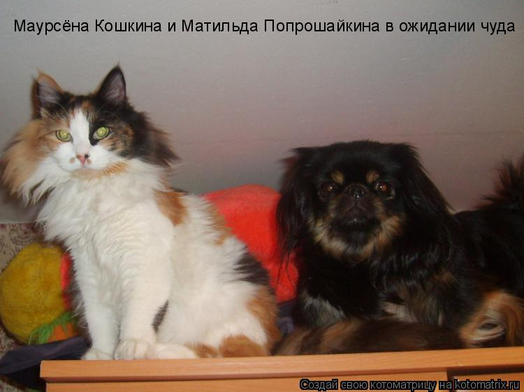 Котоматрица: Маурсёна Кошкина и Матильда Попрошайкина в ожидании чуда