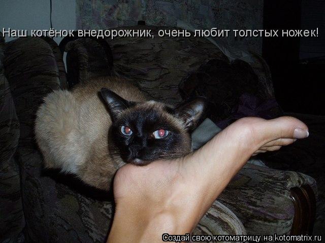 Котоматрица: Наш котёнок внедорожник, очень любит толстых ножек!