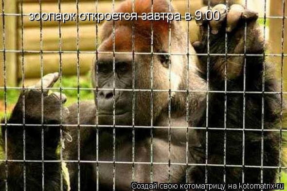 Котоматрица: зоопарк откроется завтра в 9:00