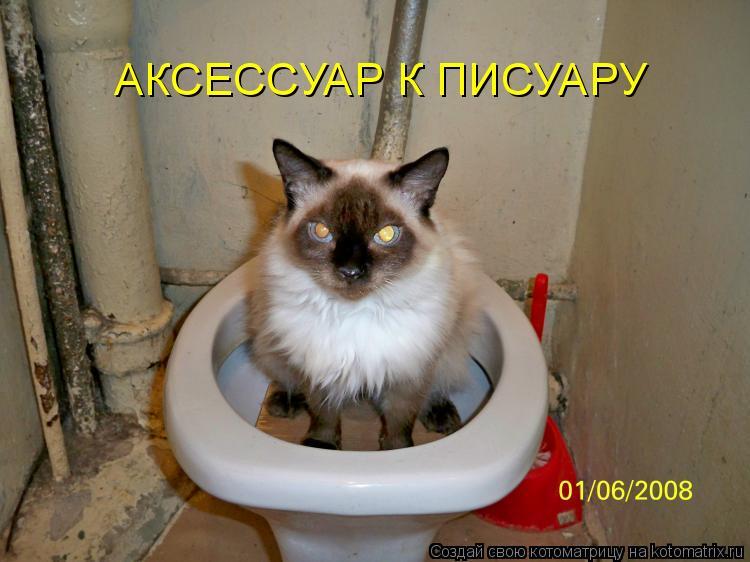 Котоматрица: АКСЕССУАР К ПИСУАРУ