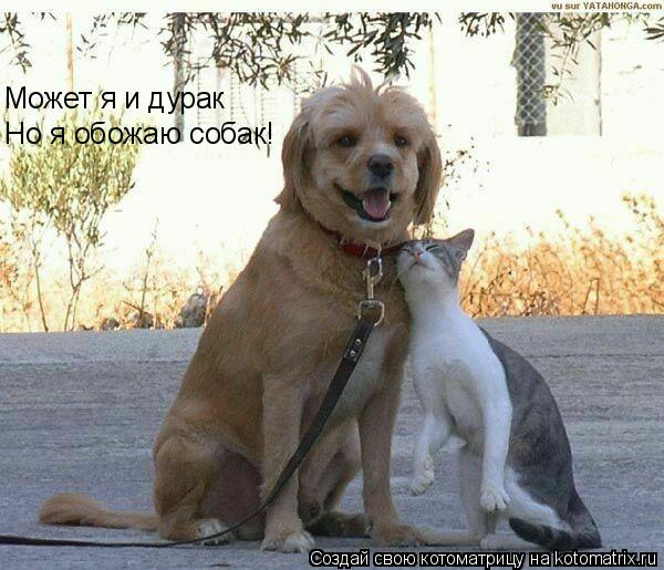 Котоматрица: Но я обожаю собак! Может я и дурак