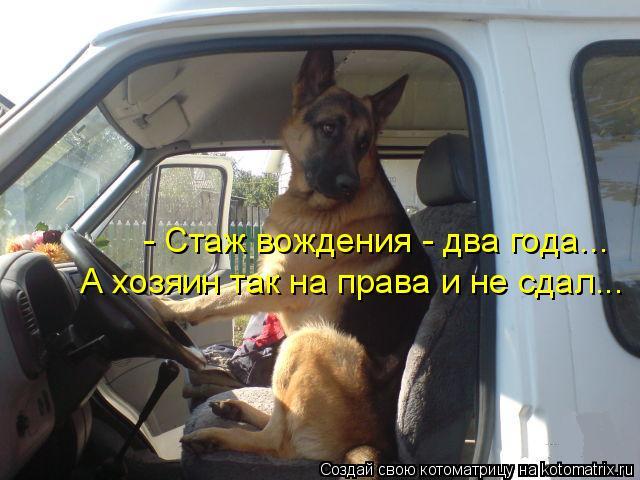 Котоматрица: - Стаж вождения - два года... А хозяин так на права и не сдал...