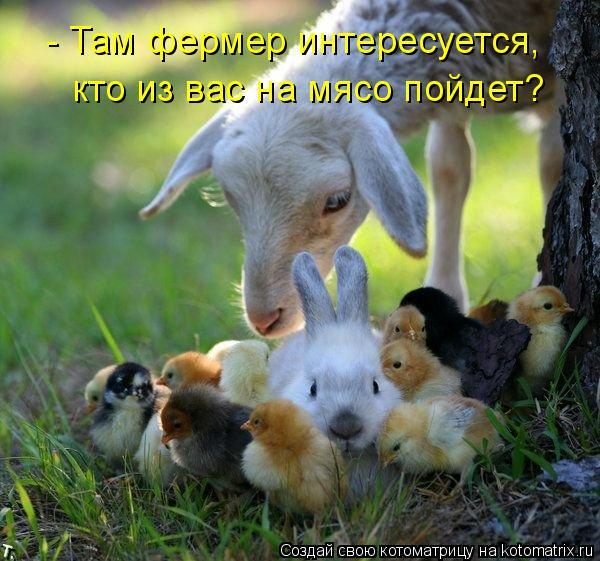 Котоматрица: - Там фермер интересуется, кто из вас на мясо пойдет?