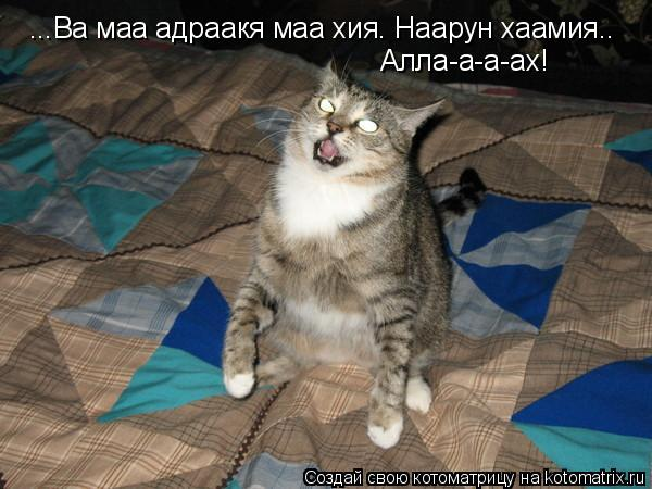 Котоматрица: ...Ва маа адраакя маа хия. Наарун хаамия.. Алла-а-а-ах!