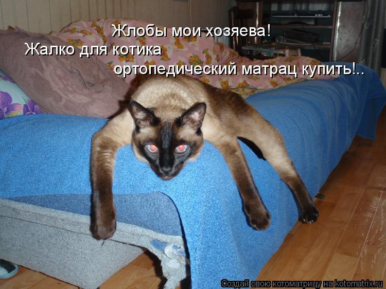 Котоматрица: Жлобы мои хозяева! Жалко для котика  ортопедический матрац купить!..