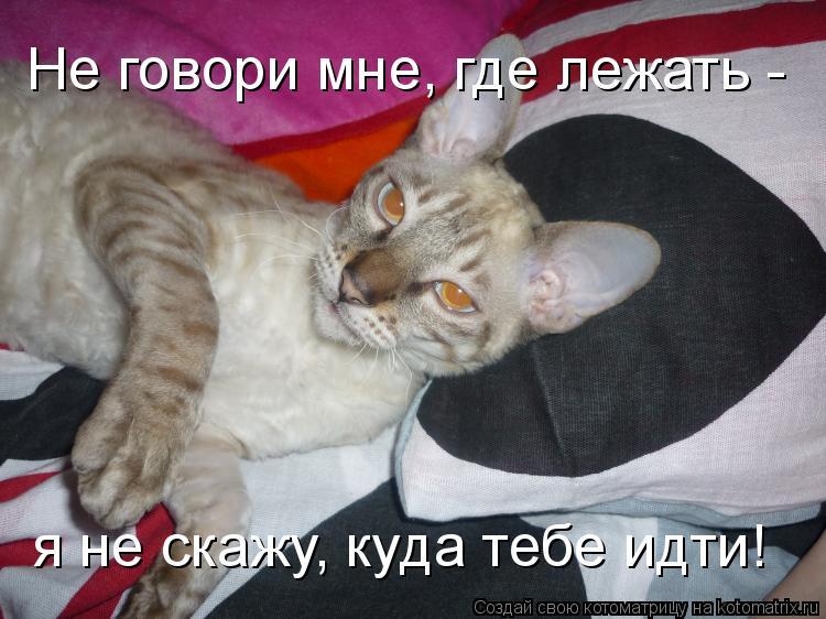 Котоматрица: Не говори мне, где лежать - я не скажу, куда тебе идти!