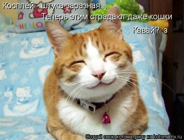 Котоматрица: Косплей - штука заразная... Теперь этим страдают даже кошки Кавай? :з