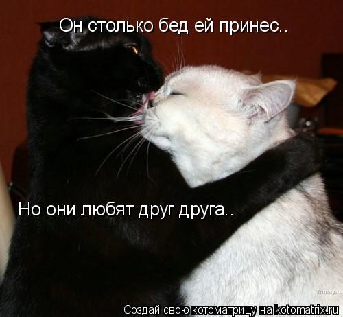 Котоматрица: Он столько бед ей принес.. Но они любят друг друга..