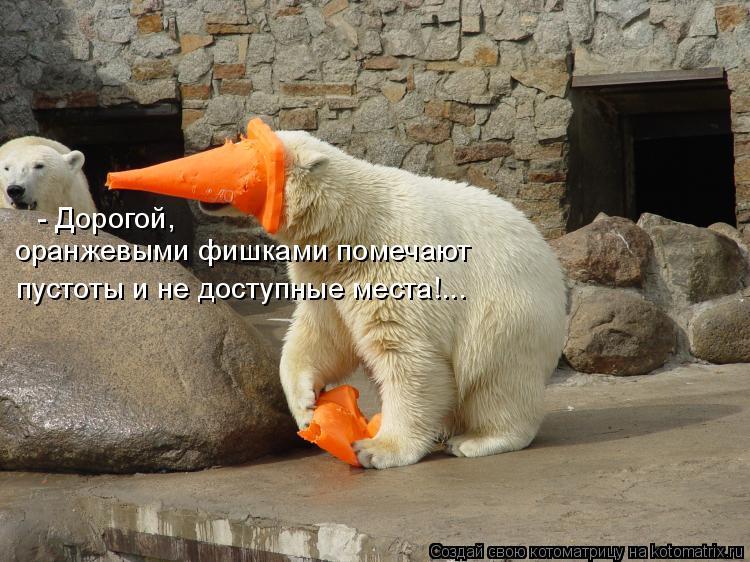 Котоматрица: - Дорогой,  оранжевыми фишками помечают  пустоты и не доступные места!...
