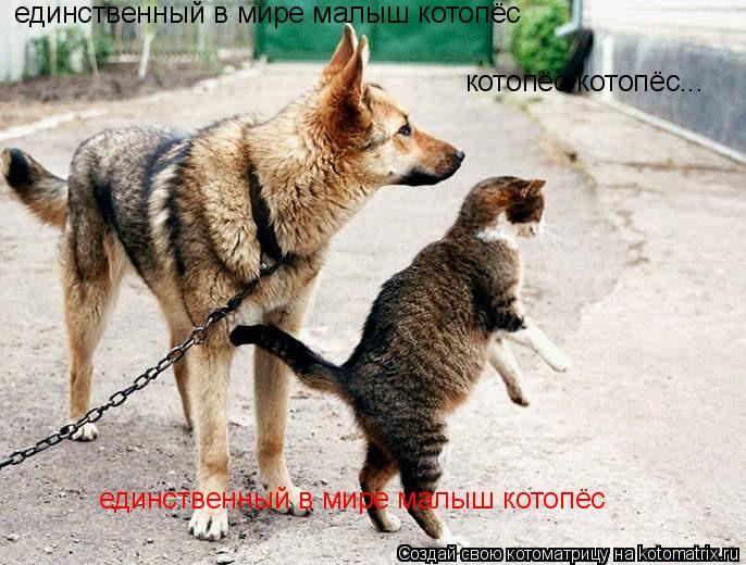 Котоматрица: единственный в мире малыш котопёс котопёс котопёс... единственный в мире малыш котопёс