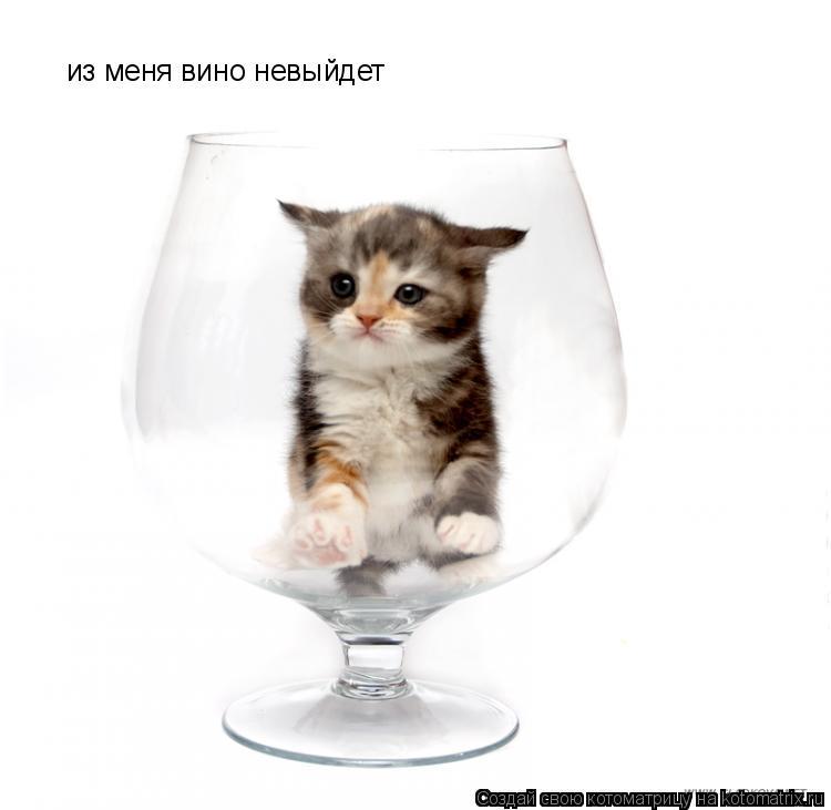 Котоматрица: из меня вино невыйдет