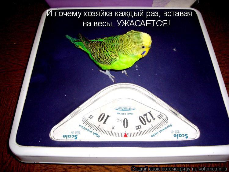 Котоматрица: И почему хозяйка каждый раз, вставая  на весы, УЖАСАЕТСЯ!
