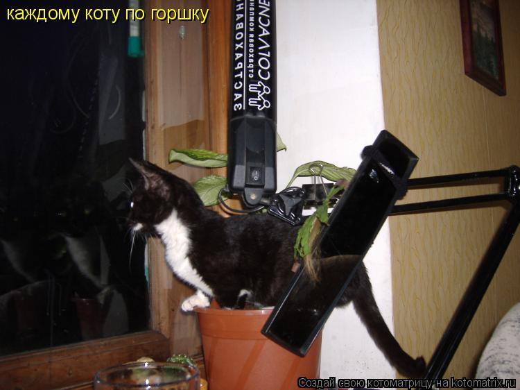 Котоматрица: каждому коту по горшку