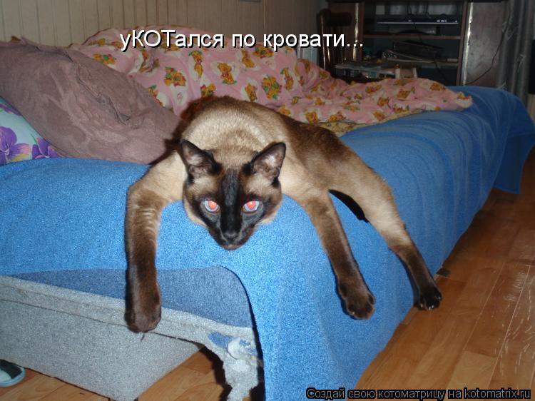 Котоматрица: уКОТался по кровати...