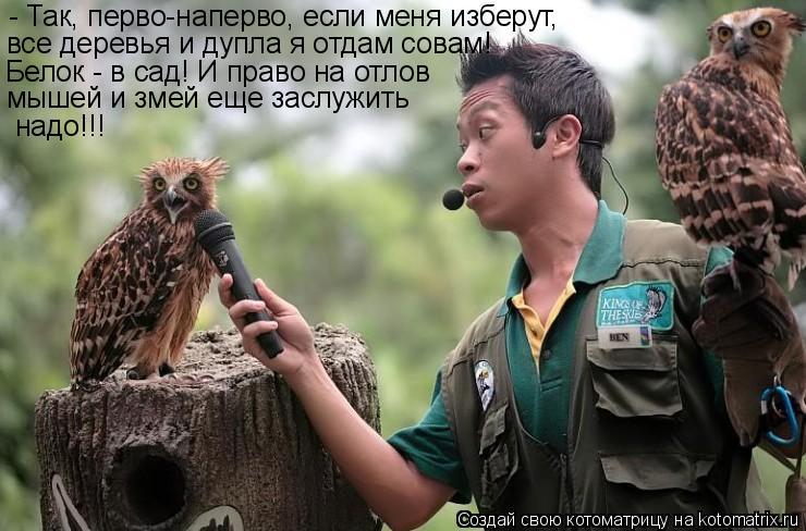 Котоматрица: - Так, перво-наперво, если меня изберут, все деревья и дупла я отдам совам!  Белок - в сад! И право на отлов мышей и змей еще заслужить надо!!!