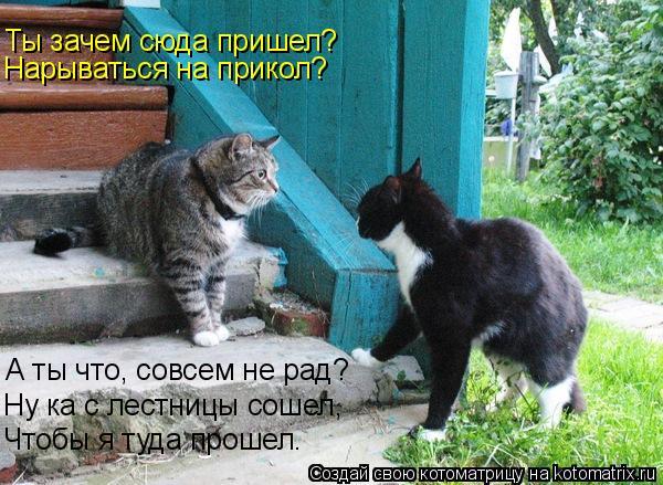 Котоматрица: Ты зачем сюда пришел? Нарываться на прикол? А ты что, совсем не рад? Ну ка с лестницы сошел, Чтобы я туда прошел.