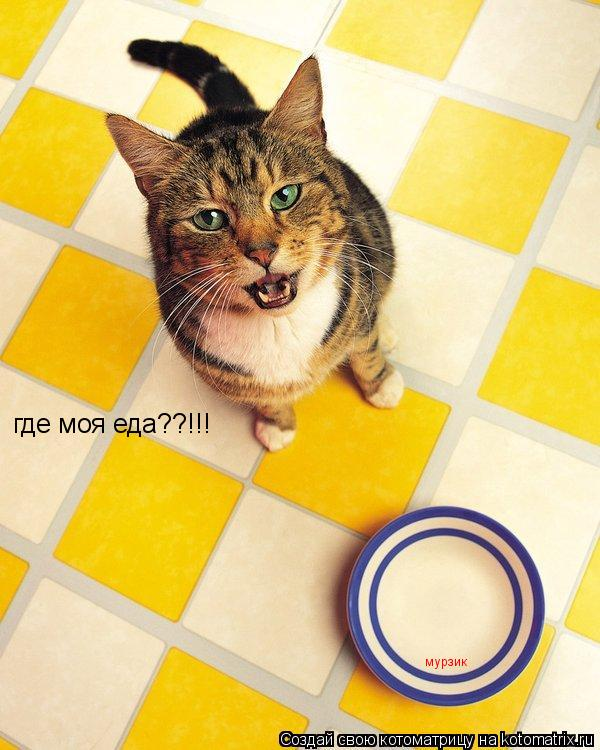 Котоматрица: где моя еда??!!! мурзик