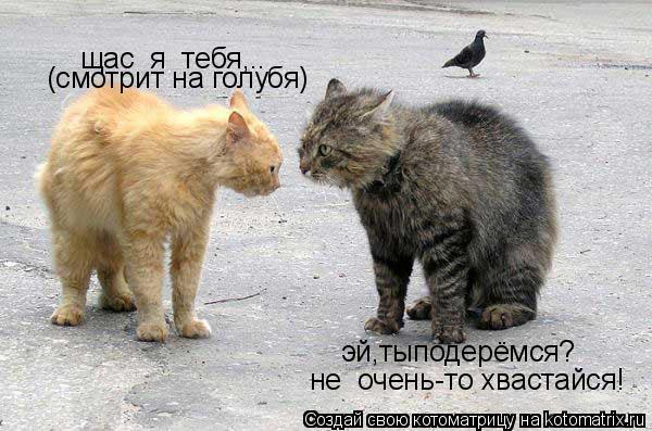 Котоматрица: эй,тыподерёмся? щас  я  тебя,.. (смотрит на голубя) не  очень-то хвастайся!
