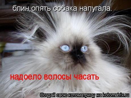 Котоматрица: блин,опять собака напугала. надоело волосы часать надоело волосы часать