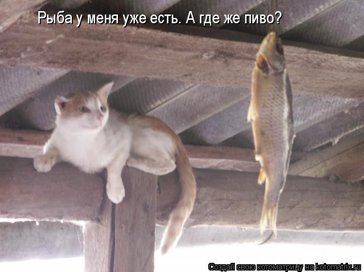 Котоматрица: Рыба у меня уже есть. А где же пиво?