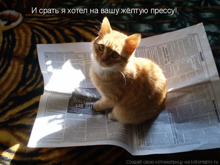 Котоматрица: И срать я хотел на вашу жёлтую прессу!