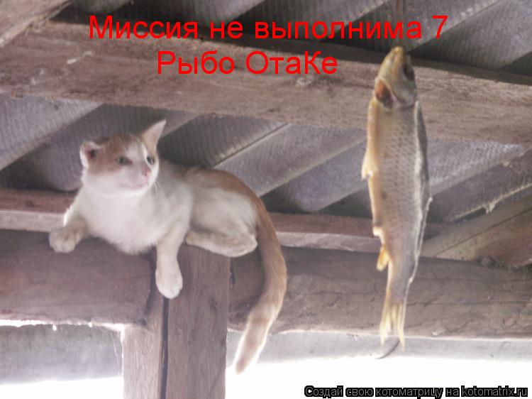 Котоматрица: Миссия не выполнима 7 Рыбо ОтаКе