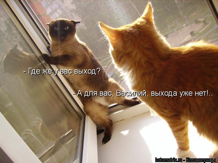 Котоматрица: - Где же у вас выход? - А для вас, Василий, выхода уже нет!..