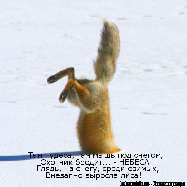 Котоматрица: Там чудеса, там мышь под снегом, Охотник бродит... - НЕБЕСА! Глядь, на снегу, среди озимых, Внезапно выросла лиса!