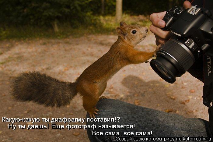 Котоматрица: Какую-какую ты диафрагму поставил!? Ну ты даешь! Еще фотограф называется! Все сама, все сама!