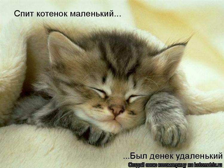 Котоматрица: Спит котенок маленький... ...Был денек удаленький