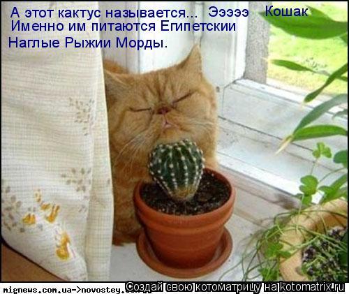 Котоматрица: А этот кактус называется...  Эээээ Кошак Именно им питаются Египетскии  Наглые Рыжии Морды.
