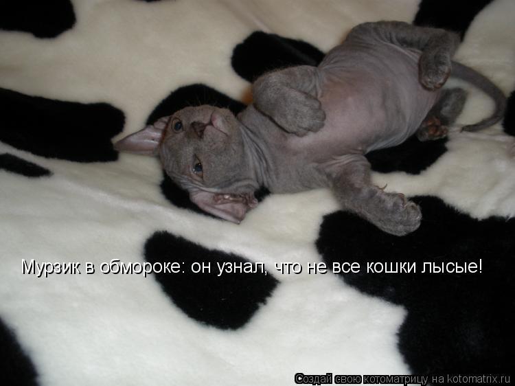 Котоматрица: Мурзик в обмороке: он узнал, что не все кошки лысые!