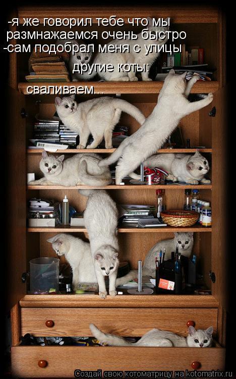 Котоматрица: -я же говорил тебе что мы  размнажаемся очень быстро -сам подобрал меня с улицы другие коты: сваливаем...