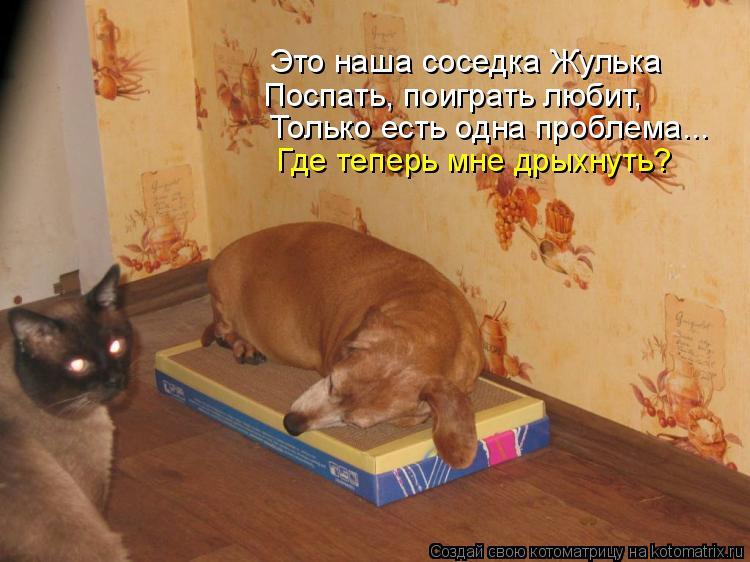 Котоматрица: Это наша соседка Жулька Поспать, поиграть любит, Только есть одна проблема... Где теперь мне дрыхнуть?