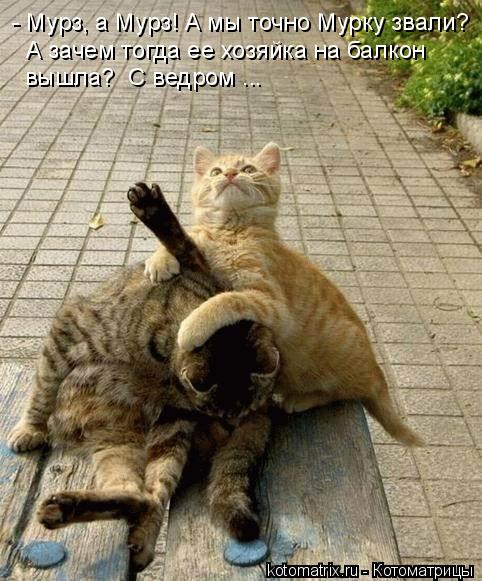 Котоматрица: - Мурз, а Мурз! А мы точно Мурку звали? А зачем тогда ее хозяйка на балкон вышла?  С ведром ...