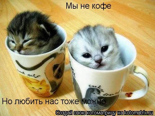 Котоматрица: Мы не кофе Но любить нас тоже можно