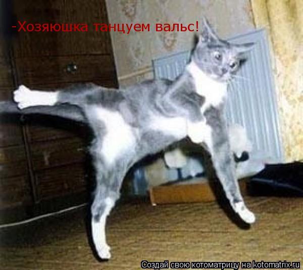 Котоматрица: -Хозяюшка танцуем вальс!