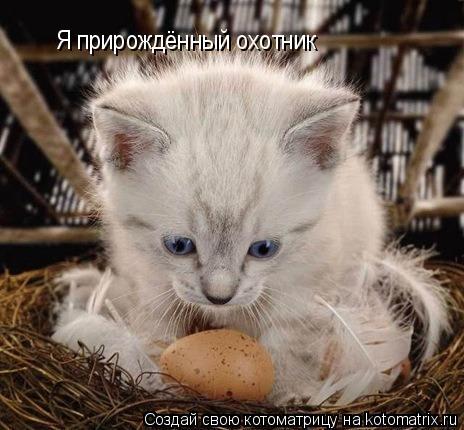 Котоматрица: Я прирождённый охотник