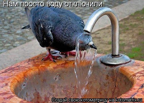Котоматрица: Нам просто воду отключили